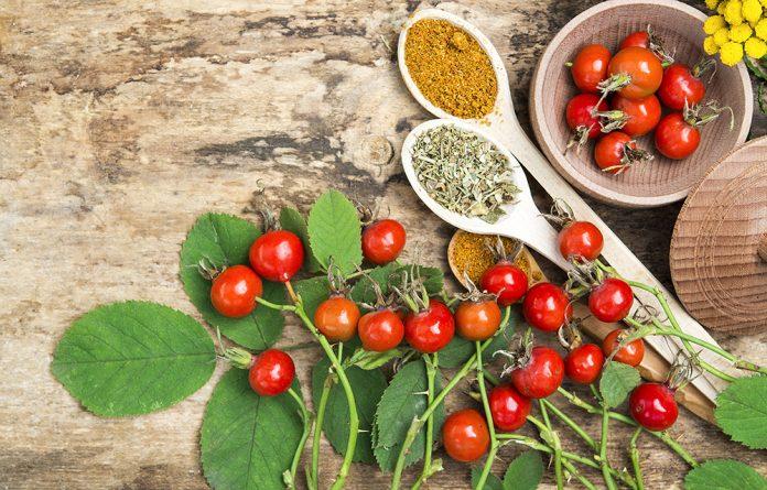 nutrição holística